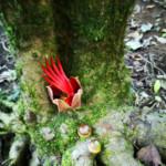 """L'albero che ho fotografato quel giorno si chiama """"la mano del diavolo""""...casualità?"""